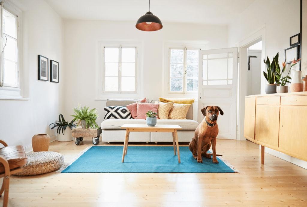 chien appartement salon