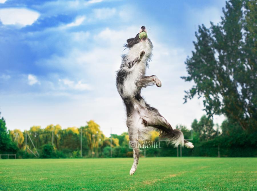jeu balle chien