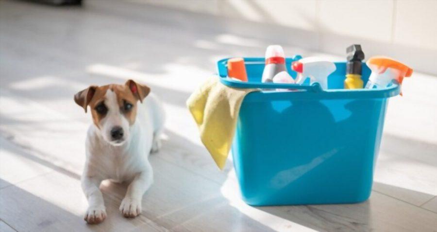 maison propre chien