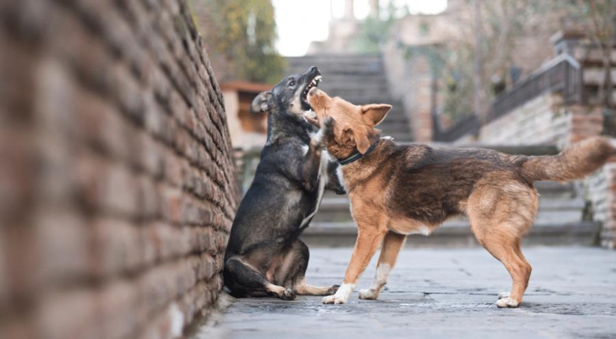 chien regulateur