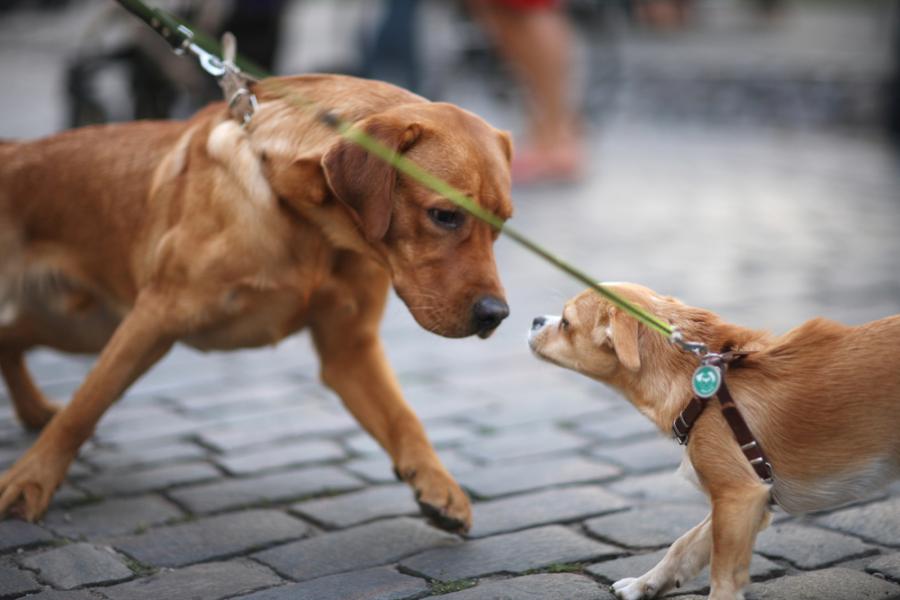 chiens rencontre