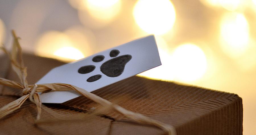 box chien étiquette