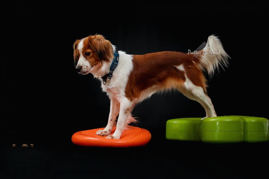 Fitness canin leurre inversé Ludie