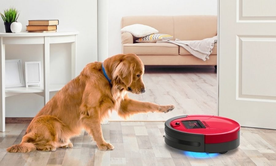 xiaomi robot aspirateur chien